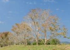 Deciduous Tree Stock Photos