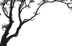 Deciduous tree. Silhouette on white background, illustration stock illustration