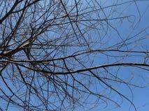 Deciduous tree in summer. Deciduous tree summer sky arid royalty free stock image
