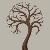 Deciduous tree trunk low Royalty Free Stock Photography