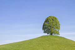 Deciduous tree on the Veigl mountain Royalty Free Stock Photos