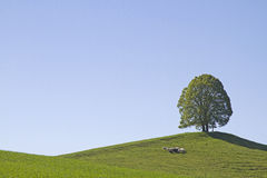 Deciduous tree on the Veigl mountain. A single standing deciduous tree on the moraine hills of Veiglberges amid the beautiful foothills of the Alps of the Toelz Royalty Free Stock Photos