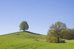 Deciduous tree on the Veigl mountain Stock Images