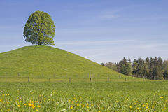 Deciduous tree on the Veigl mountain. A single standing deciduous tree on the moraine hills of Veiglberges amid the beautiful foothills of the Alps of the Toelz Royalty Free Stock Photo