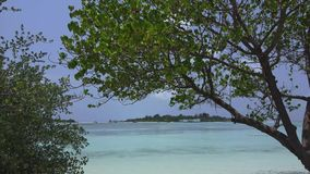 Deciduous trees against the blue sky, beach. Maldives video. Horizontal stock video footage
