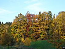 Deciduous trees in autumn Royalty Free Stock Photo