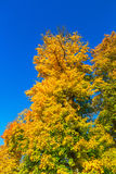 Deciduous trees Royalty Free Stock Photo