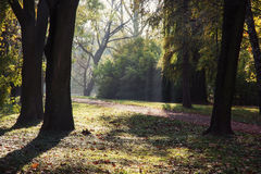 Deciduous trees in autumn park. Natural theme Royalty Free Stock Photography