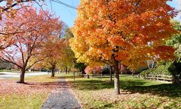 Deciduous Trees In Autumn Quiet Suburb Of Chicago royalty free stock photos