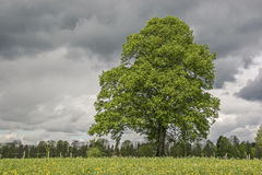 Deciduous trees in bad weather Stock Image