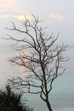 Deciduous trees beside of beautiful beach Royalty Free Stock Image