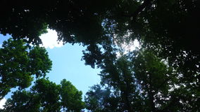 Deciduous trees and a blue sky stock video footage