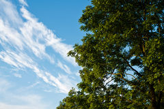 Deciduous trees and blue sky whith clouds Stock Photo
