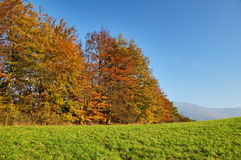 Deciduous trees colorful autumn colors of orange on the horizon green meadows Stock Photos