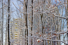 Deciduous trees covered with snow against the apartment building Stock Photo