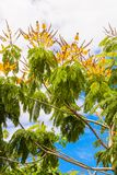 Deciduous trees in exotic countries Stock Photos
