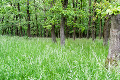 Deciduous trees in forest Stock Image