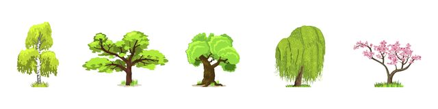 Deciduous trees in four seasons - spring, summer, autumn, winter. Nature and ecology. Green trees vector illustration. stock image