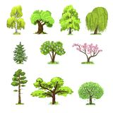 Deciduous trees in four seasons - spring, summer, autumn, winter. Nature and ecology. Green trees vector illustration. Deciduous trees in four seasons - spring stock illustration