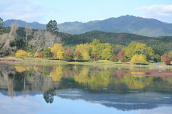 Deciduous Trees. In Front of Lake with Mountains as background Royalty Free Stock Photography