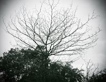 Deciduous trees and sky in black and white mode.  Royalty Free Stock Image