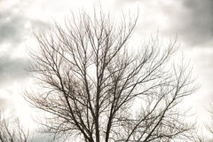 Deciduous trees in winter Stock Photos