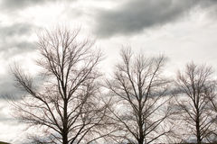 Deciduous trees in winter Royalty Free Stock Image