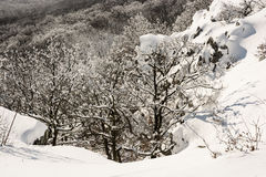 Deciduous white forest in winter, natural scene Stock Image