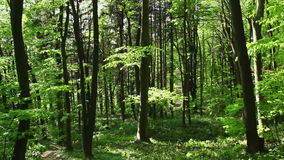 Deciduous wood at spring sunny day stock video