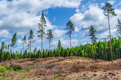 Decimated deforested hillside. Slopes with the remnants of felled tree trunks in a conceptual image of loss of trees and forests affecting the ecology Stock Photo