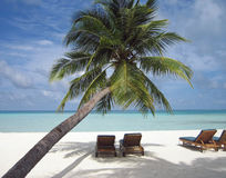 Deck chair under a palm-tree on a tropical beach Stock Photos