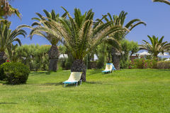 Deck chairs on the lawn under the palm trees Stock Photography