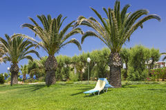 Deck chairs on the lawn under the palm trees Royalty Free Stock Photo