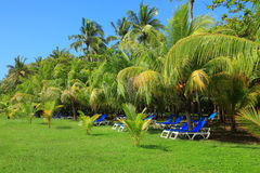 Deck chairs under palm trees Stock Photography