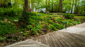 Deck and colorful woodland garden Stock Photos