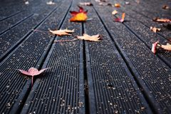Deck floor with Autumn leaves. Photograph taken in the center of Portugal in the autumn. The trees drop their colorful leaves that gently land on a dark deck royalty free stock image