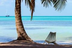 Deckchair onder schaduw van palm stock foto's