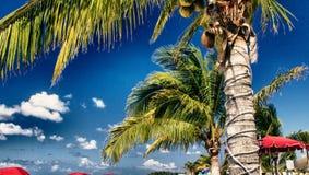 Deckchairs и зонтики на красивом пляже Стоковые Фото