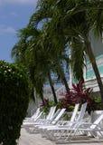 Deckchairs en de Palmen Stock Afbeeldingen