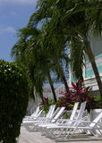 The Deckchairs and The Palms. The Deckchairs under the palms shadow in one of hotels in Belize City, Belize Stock Images