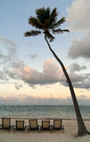 Deckchairs under palmtree on the beach at sunset Stock Photo