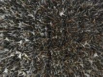 Decke des Glöckchens Stockfoto