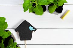 Deckel in Form von Haus mit Babysprösslingen, Trieb, Sämling, Schössling in einer Holzkiste und Farbe weissen Flache Lage mit Kop stockfoto