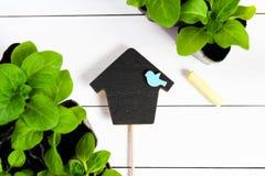 Deckel in Form von Haus mit jungen Sprösslingen, Trieb, Sämling, Schössling in einer Holzkiste und Farbe weissen Flache Lage mit  stockfotos