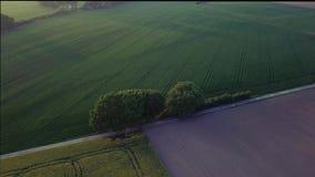 Decken Film- Mittelgeschwindigkeitsbahn der Luftgesamtlänge und das Brummen auf, das von den Bäumen mitten in Feldern im Sonnenun stock video footage