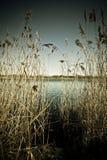 Decken Sie entlang dem Seeufer mit Schilf Lizenzfreie Stockbilder