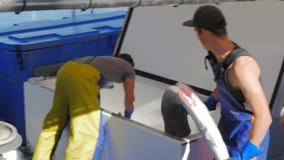 Deckhand rozładowywa rekinu ścierwo od łodzi rybackiej zbiory wideo