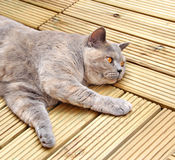 decking πολυτέλεια γατών στοκ εικόνα