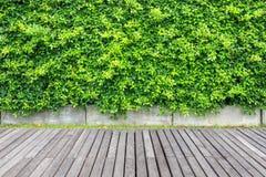 Decking et mur en bois gris d'usine dans la décoration de jardin libre image libre de droits