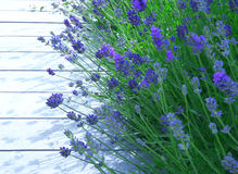 decking and  lavender Royalty Free Stock Image